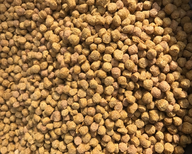 1kg of 6mm Floating Winter Food - 20% Wheatgerm