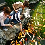 Koi & Pond Fish Treats